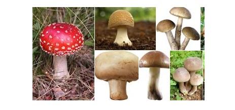mushroom samples